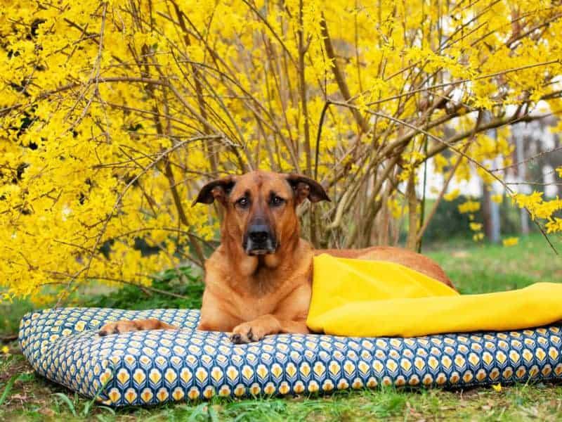 Orthopädisches Hundekissen Sealand