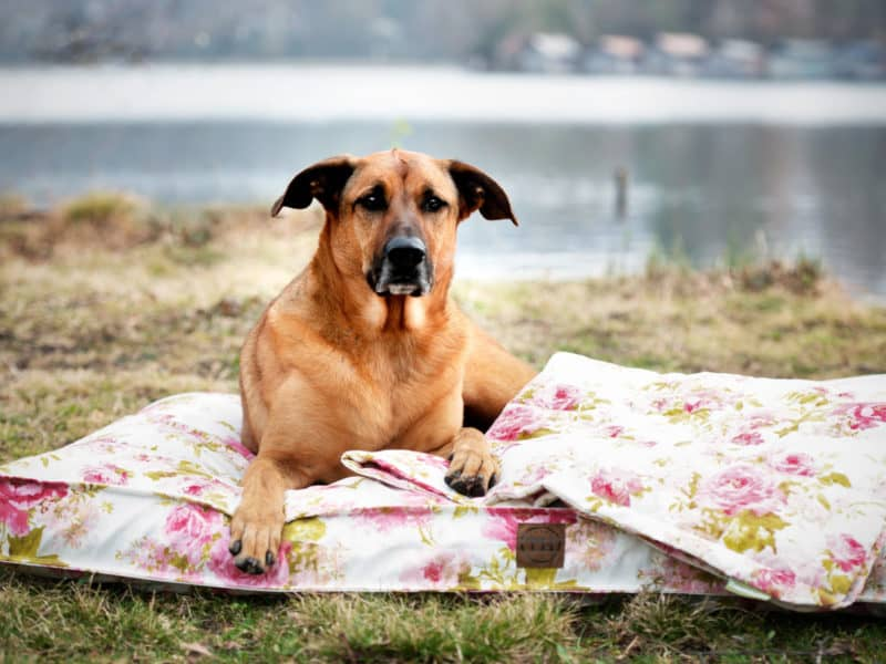 Bezug Rosenstolz für Hundekissen