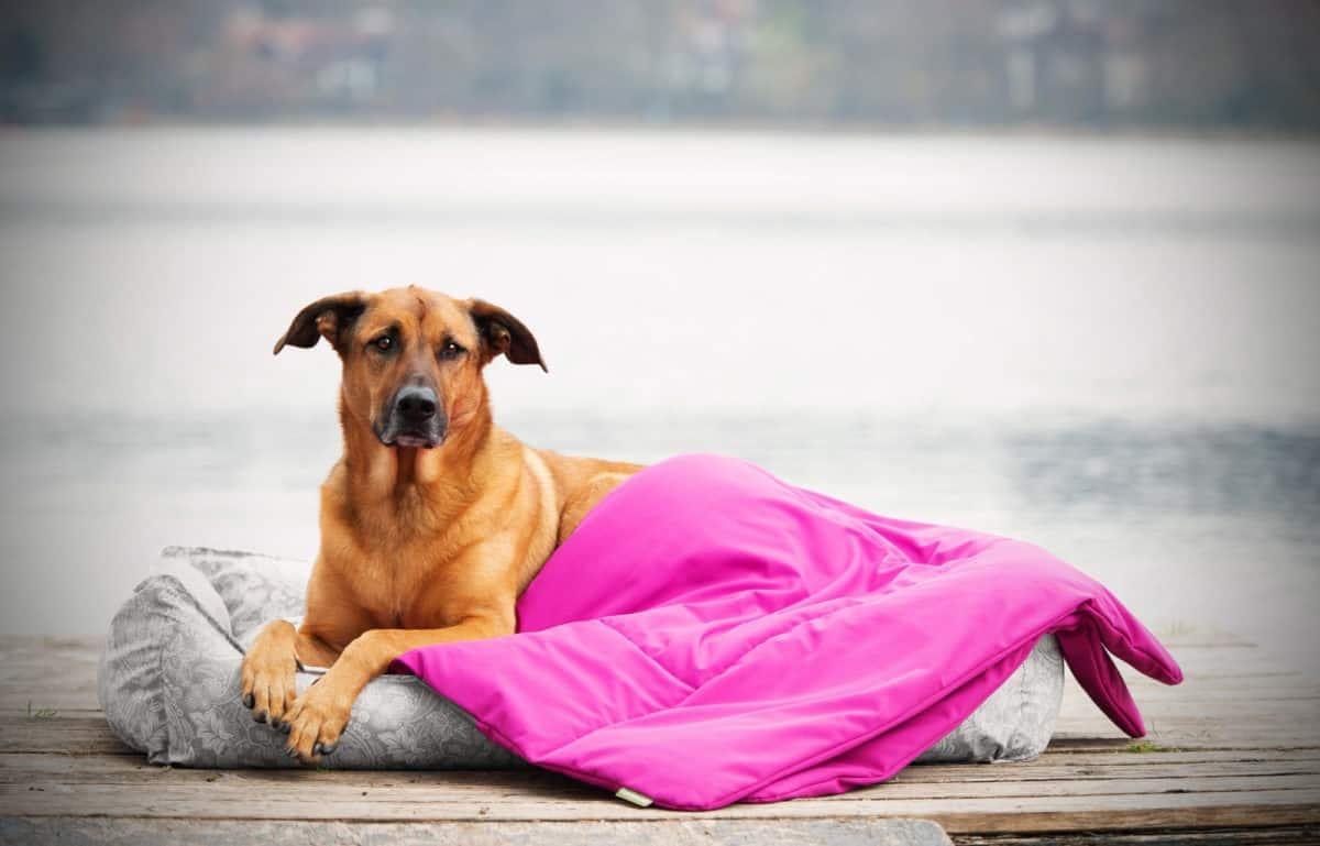 Hundedecke Sealand Pink Style