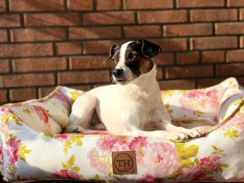 Orthopädisches Hundebett Rosenstolz