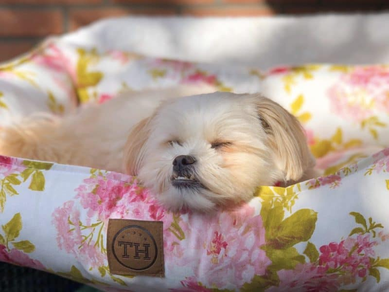 Bezug Rosenstolz für Hundebetten