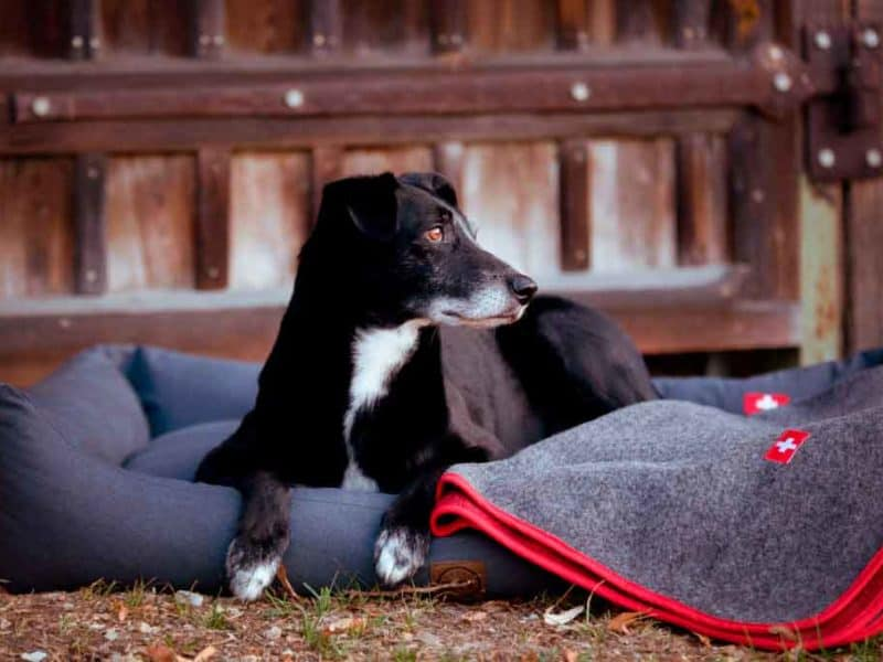orthopädisches Hundebett Wallis Anthrazit mit Almdeckerl Loden Rot