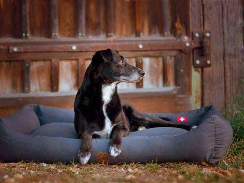 orthopädisches Hundebett Wallis Anthrazit mit Schweizer Flagge