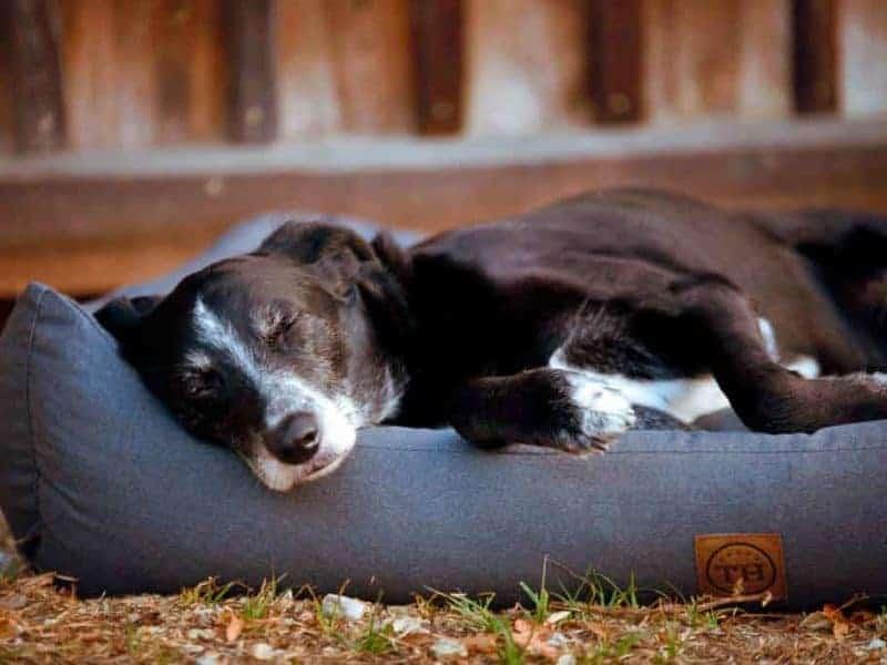 orthopädisches Hundebett Wallis Anthrazit