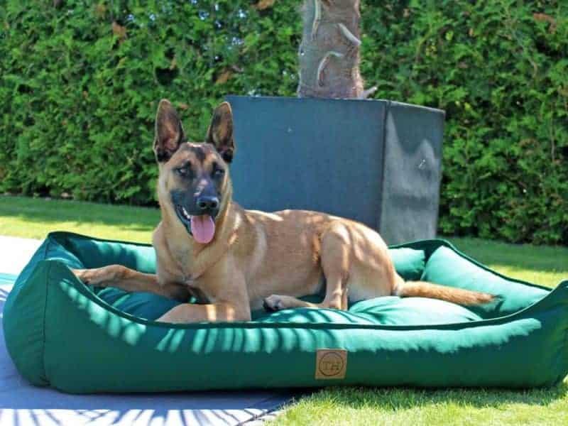 Hundebett Organic 95 Tanne mit Malinois