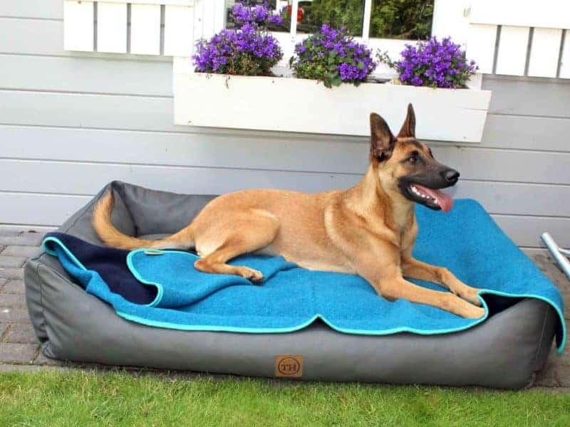 Lodendecke Türkis Marine auf Hundebett mit Malinois