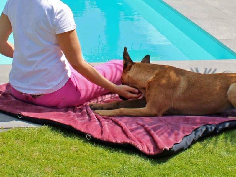 Traumhund® Picknick: Outdoordecke und Tasche Marine Berry mit Malinois am Pool