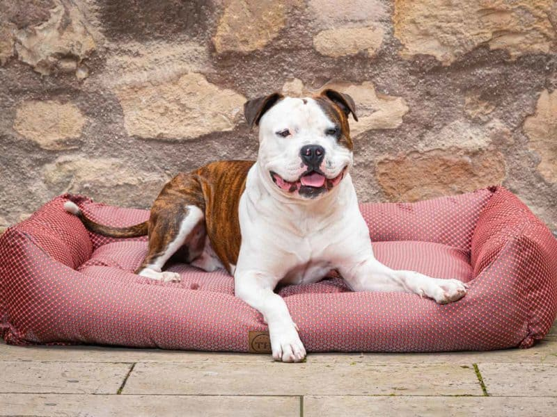 Hundebett CARA in Rot mit Bulldogge
