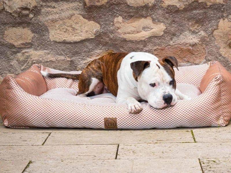 Hundebett CARA in Terracotta mit Bulldogge