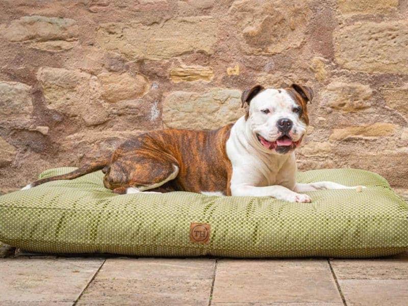 Hundekissen CARA in Grün mit Bulldogge