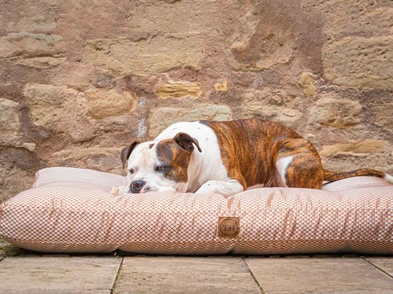 Hundekissen CARA in Terracotta mit Bulldogge