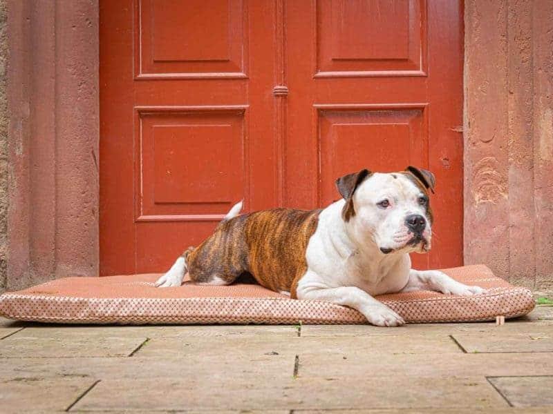 Hundematte CARA in Terracotta mit Bulldogge