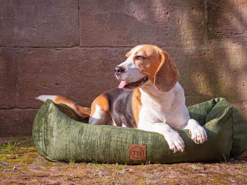 Hundebett Vintage-Samt in Dunkelgrün mit Beagle
