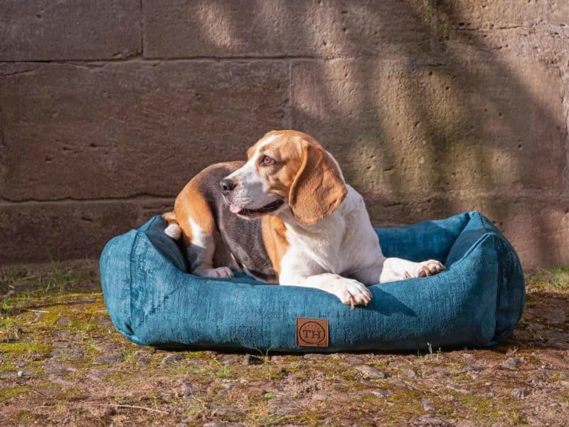Hundebett Vintage-Samt in Royal-Blau mit Beagle