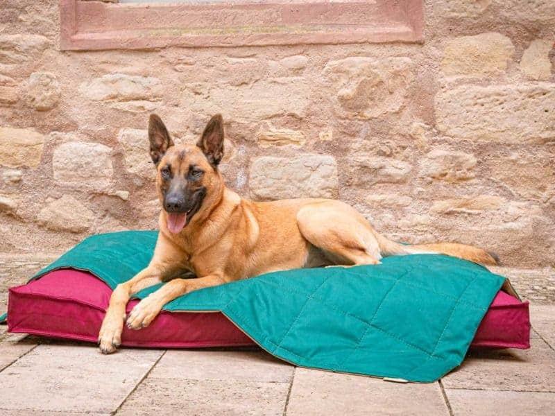 Hundekissen Organic-95 in Bordeaux und Hundedecke Organic-95 in Tanne mit Malinois