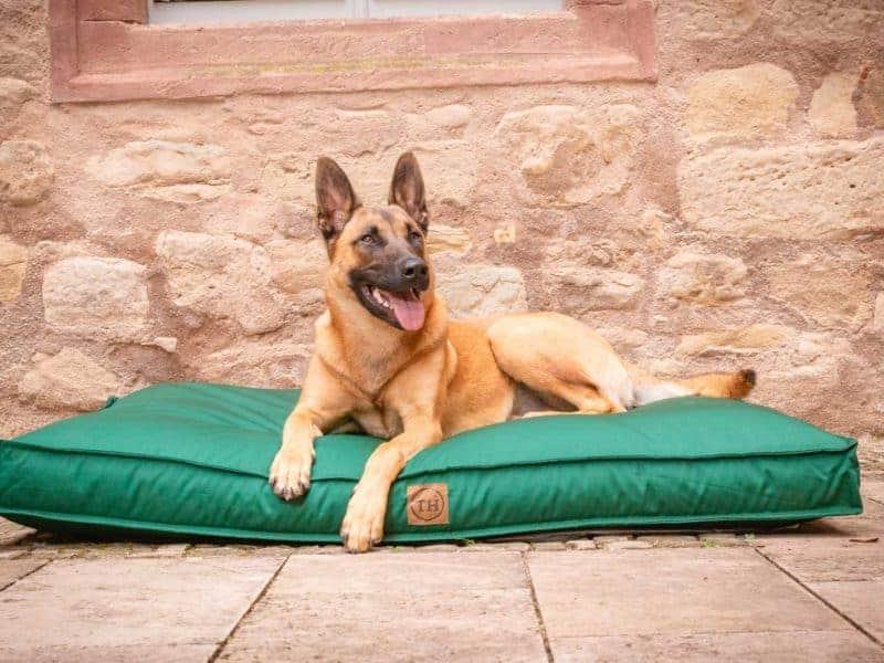 Hundekissen Organic-95 in Tanne mit Malinois