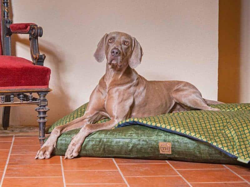 Hundedecke Ornament in Tanne auf Hundekissen Vintage-Samt in Dunkelgrün mit Weimaraner