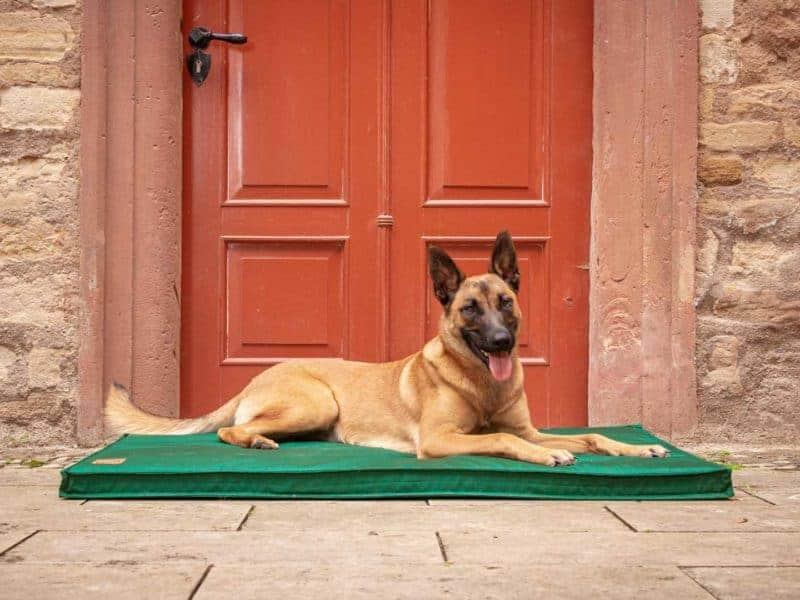 Hundematte Organic-95 in Tanne mit Malinois