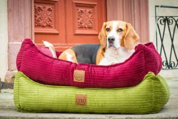 Hundebett Boheme Farbübersicht mit Beagle