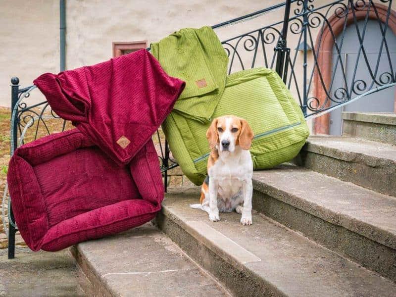 Hundebett Boheme und Bezug Farbübersicht mit Beagle