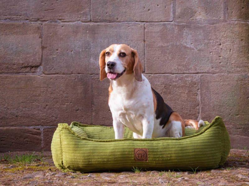 Hundebett Boheme in Grasgrün mit Beagle