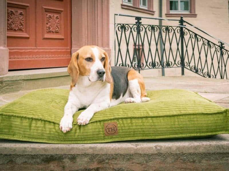 Hundekissen Boheme in Grasgrün mit Beagle