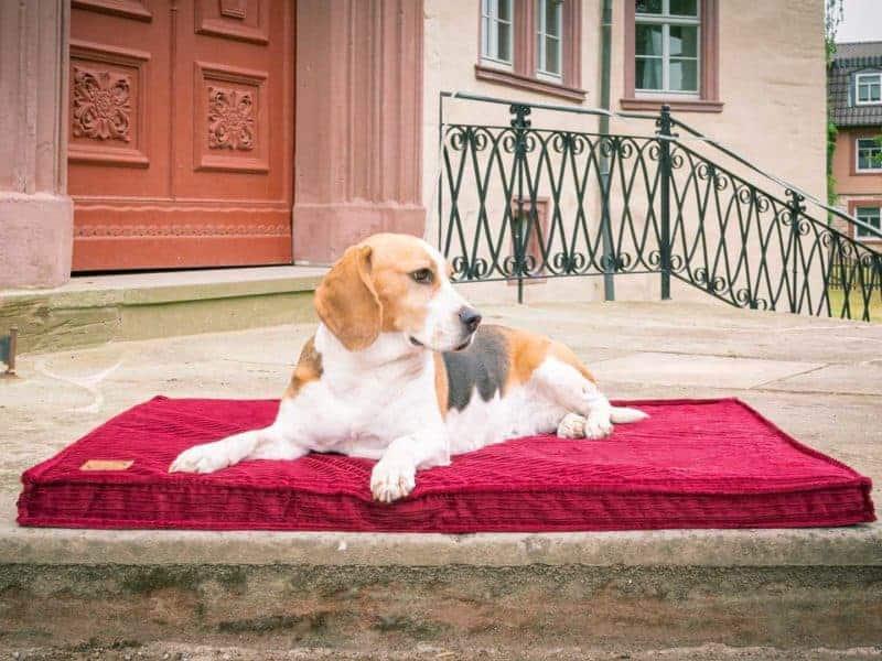 Hundematte Boheme in Bordeaux mit Beagle