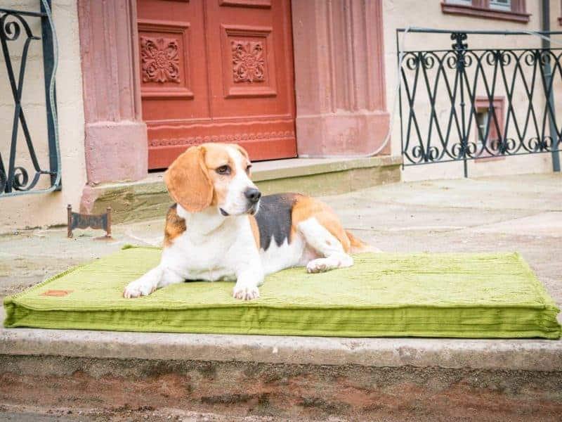 Hundematte Boheme in Grasgrün mit Beagle