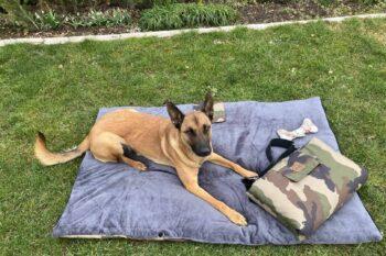 Picknick-Outdoordecke Adventure Camouflage mit Malinois auf Rasen