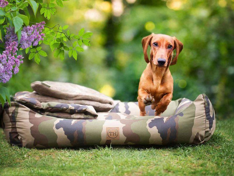 Bezug Adventure für Hundebetten von Traumhund®️