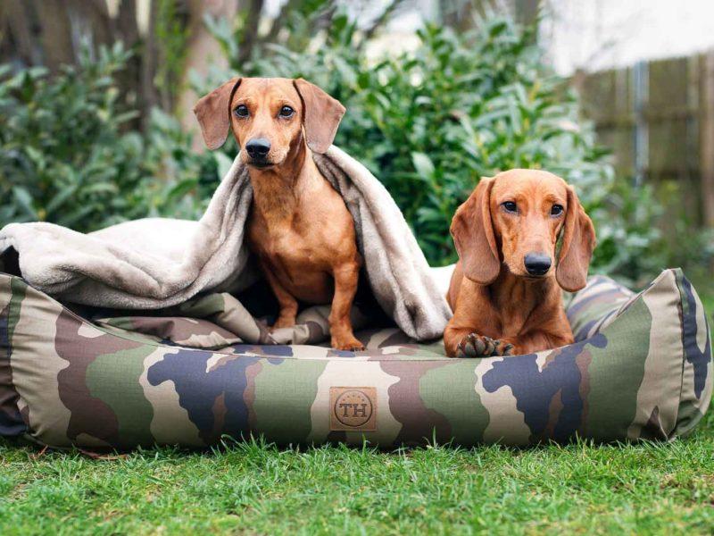 Hundebett und Hundedecke Adventure Camouflage mit Dackel