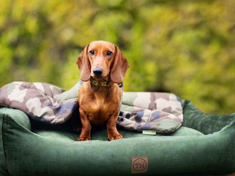 Hundebett Vintage Samt Dunkelgrün und Hundedecke Adventure Camouflage mit Dackel