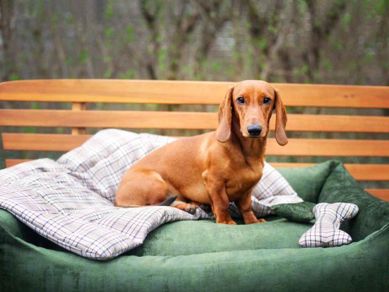 Hundebett Vintage Samt Dunkelgrün und Hundedecke und Hundeknochen Adventure Camouflage mit Dackel