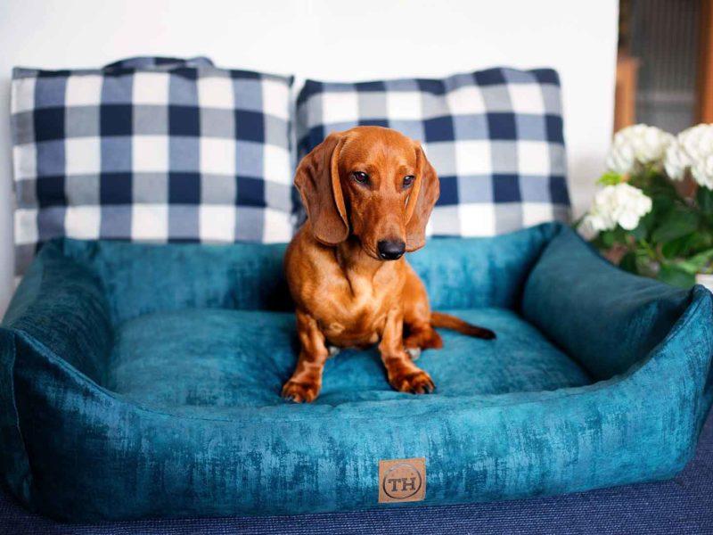 Hundebett Vintage-Samt Royal-Blau und Kissen mit Dackel