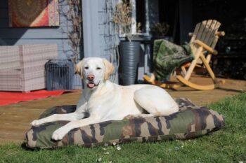Hundebett und Hundedecke Adventure Camouflage mit Golden Retriever