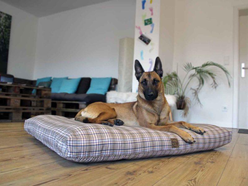 Hundekissen Adventure Cottage Malinois