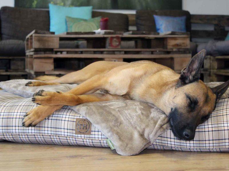 Hundekissen Adventure Cottage und Protectdecke mit Malinois