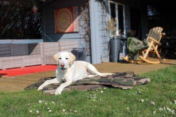 Hundematte und Hundedecke Adventure Camouflage mit Golden Retriever auf Rasen