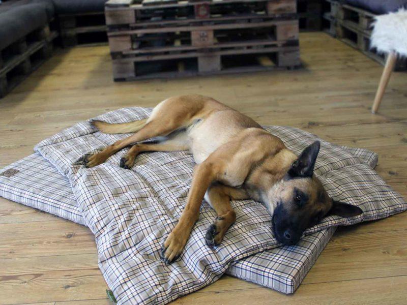 Bezug Cottage für orthopädische Hundematten von Traumhund®️