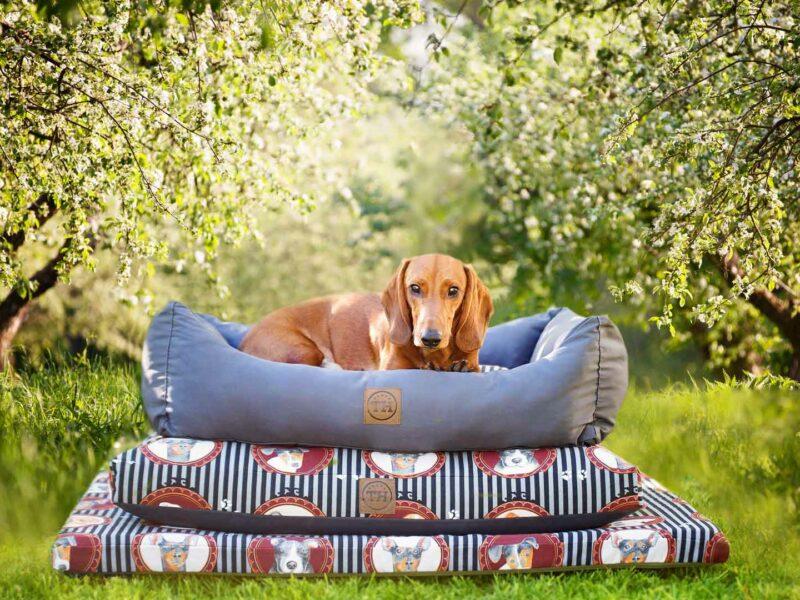 Lucky Dogs Kollektion mit Dackel auf Hundebett, Hundekissen und Hundematte