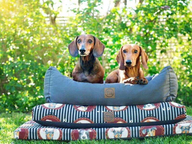 Lucky Dogs Kollektion mit 2 Dackeln auf Hundebett, Hundekissen und Hundematte