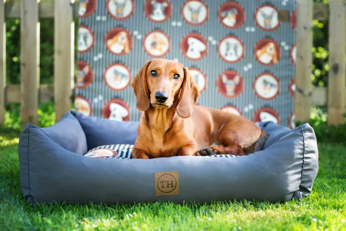 Hundebett Lucky Dogs mit Dackel