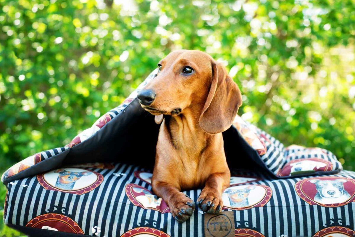 Hundekissen und Hundecke Lucky Dogs mit Dackel
