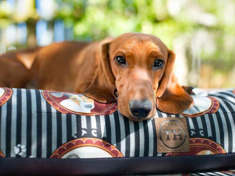 Hundekissen Lucky Dogs mit Dackel